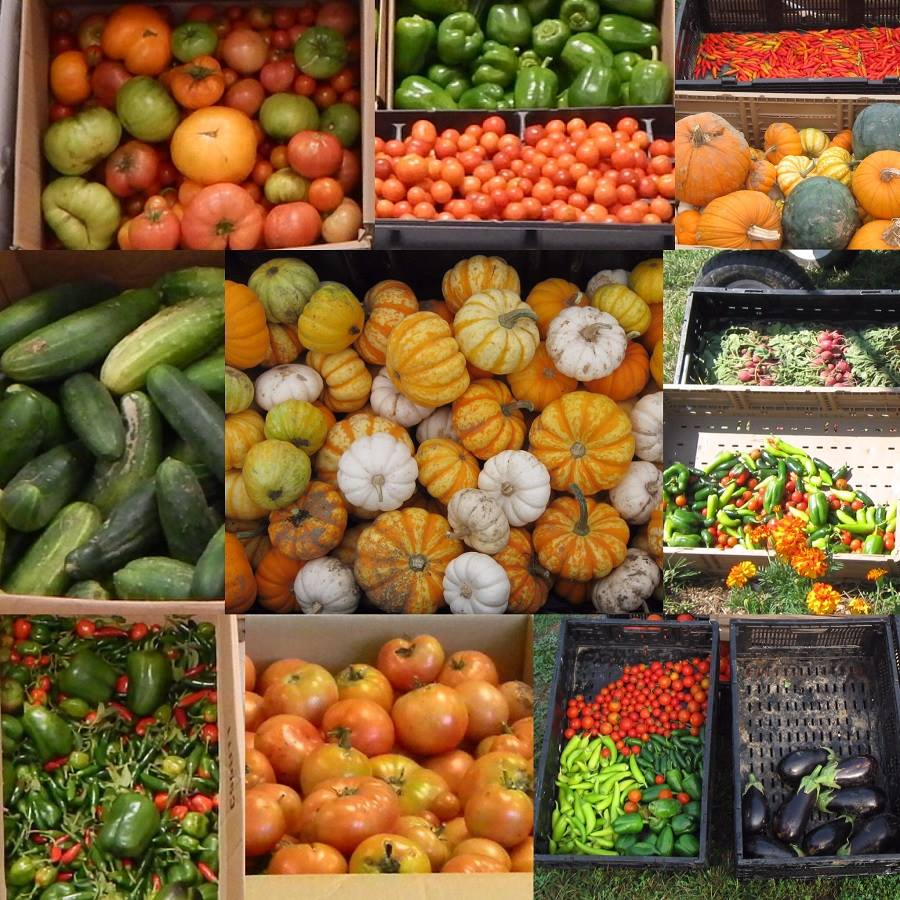 Gardens and Food Donations | Missouri Department of Corrections