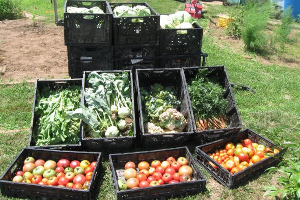 Crates full of fresh vegetables.